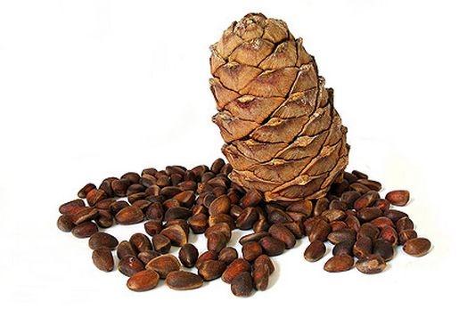 object 11231059 orehi2 Как растут настоящие орехи?